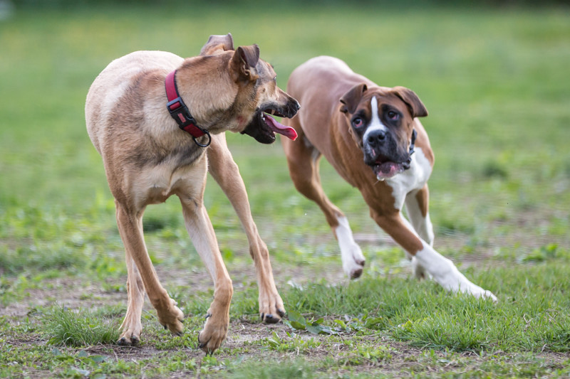Medford Dog Park 5.2.2014-3731.jpg