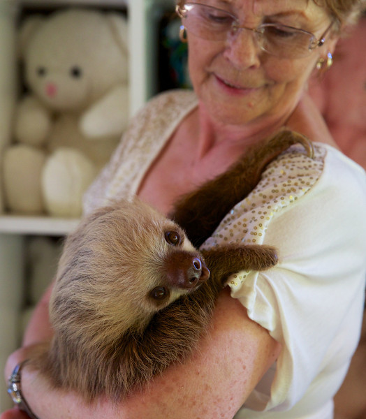 Two-fingered Sloth at the Sloth Sanctuary with Judy, head of the Sanctuary.