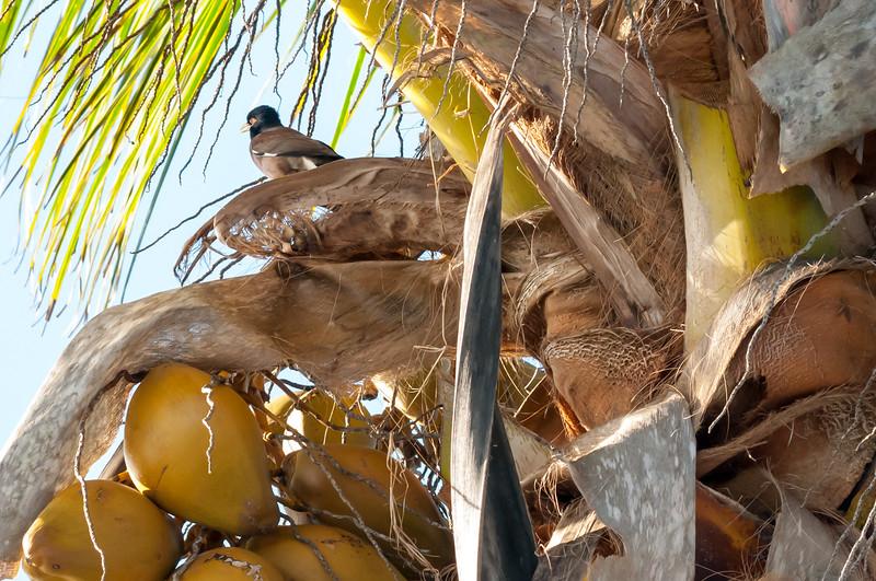 Bird On Palm Tree