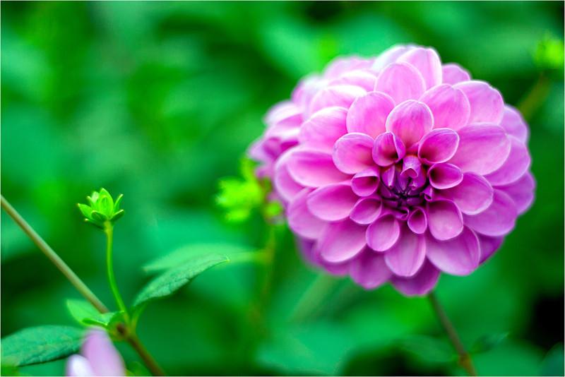 20111015_Flower16.jpg