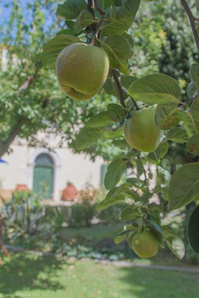 20150908-_MG_0004  olive oil.jpg