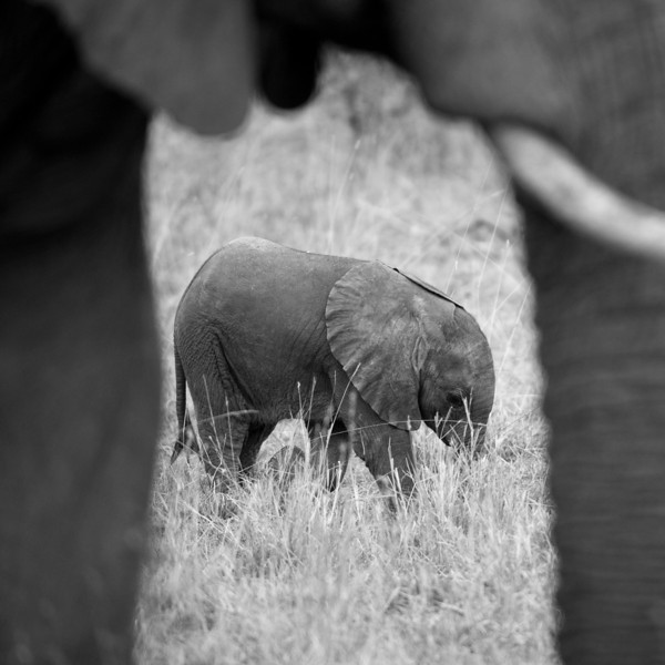 This baby elephant was born 2 days prior to this photo.