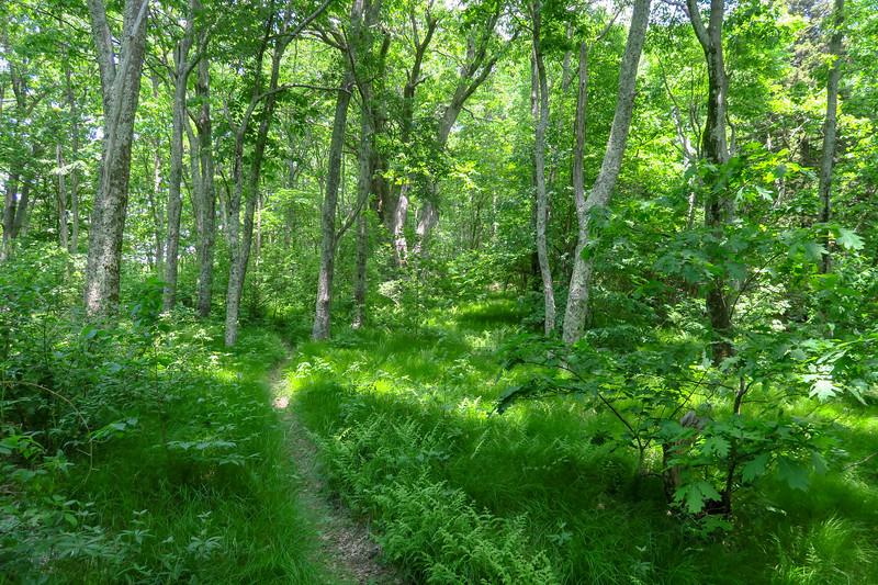 Greasy Cove Trail -- 5,220'
