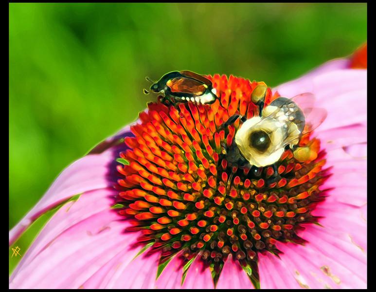 BeeBeetleDisco.jpg