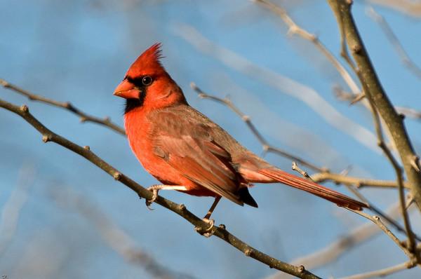 Cardinals 05Dec08