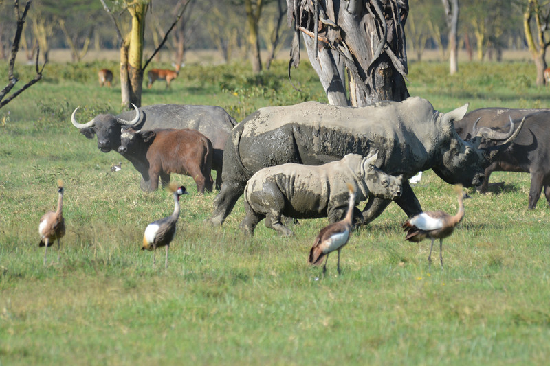 East Africa Safari 112.jpg