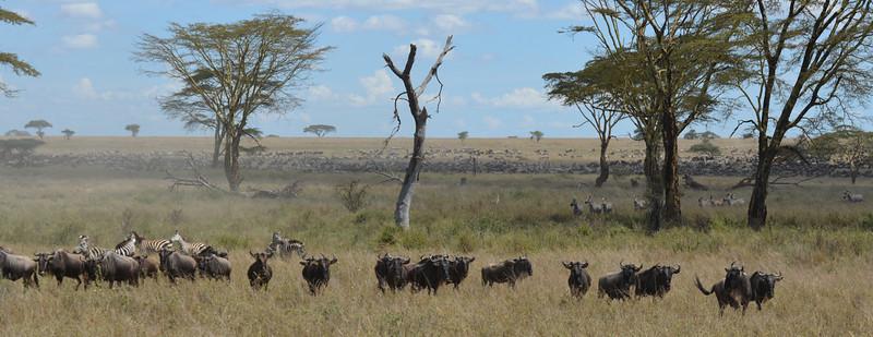 East Africa Safari 325.jpg