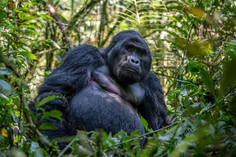 Uganda_T_Gor-527.jpg
