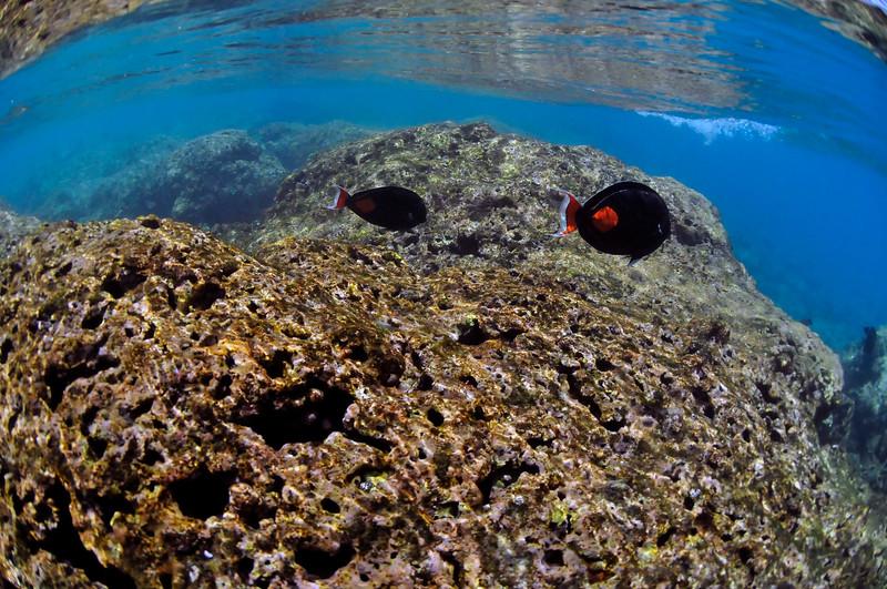 Hawaii - Hanauma Bay-48.JPG