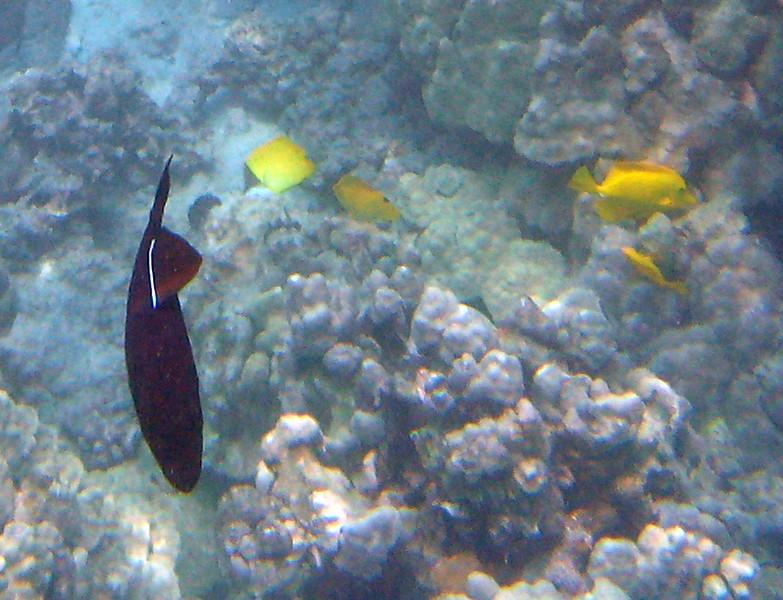 422- 20080416- Hawaii 20-Snorkelling IMG_0578.jpg