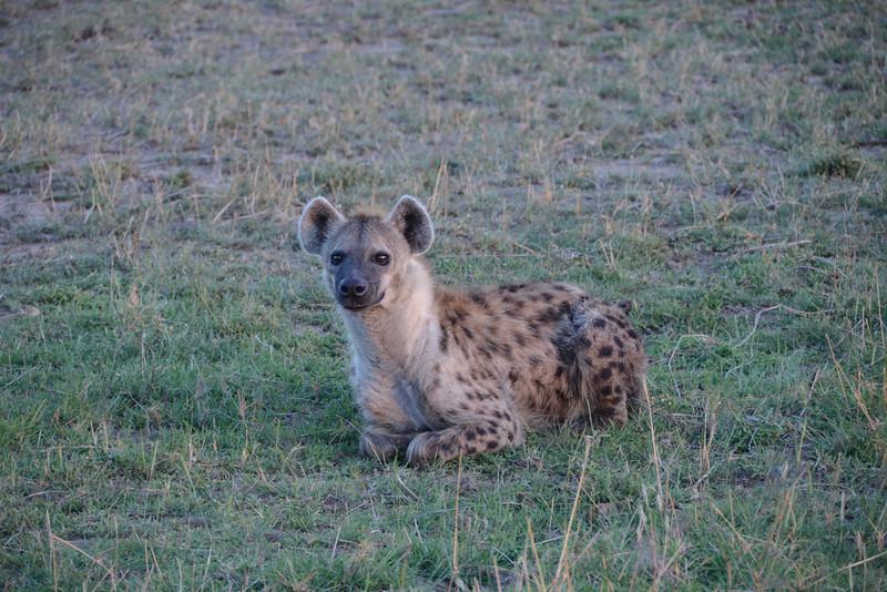 East Africa Safari 186.jpg