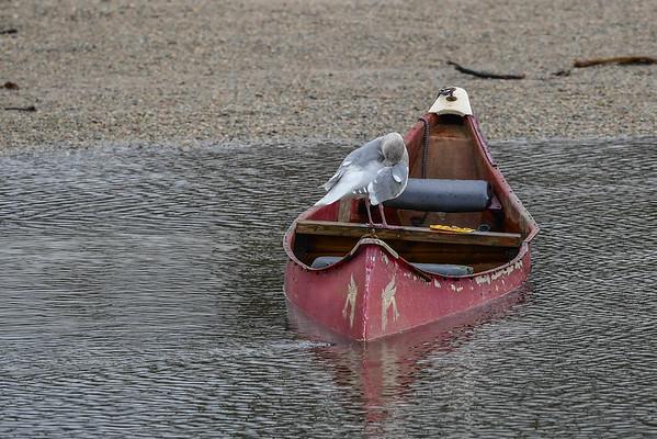 11-17-16 SeaGull Canoe - HM