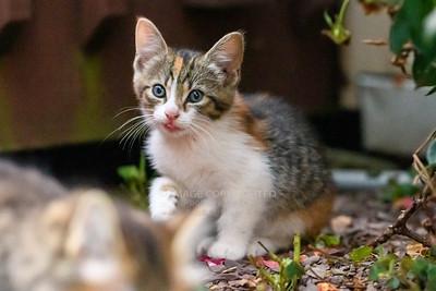 08/07/20 Kittens