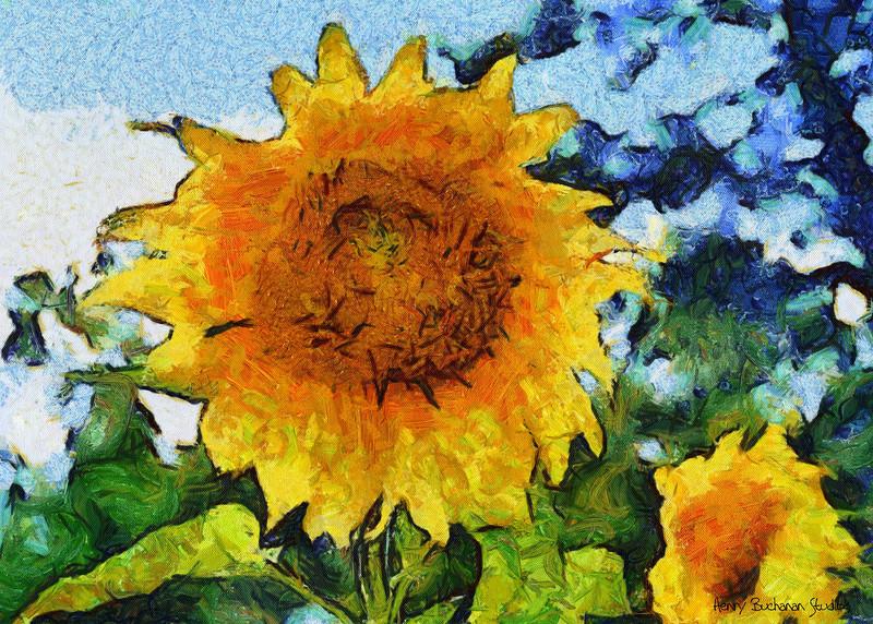 Mountain Sunflower