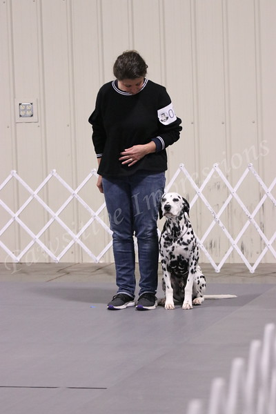 TSKC AKC Obedience Sunday 11 4 18 in Springfield MO