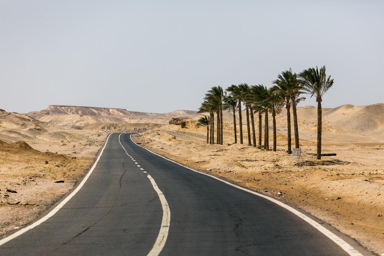 Egipt; Krajobraz; PrzezOknoAutobusu; Safari; pustynia; Droga z palmami