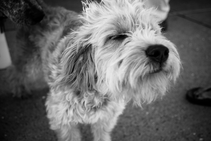 Scruffy Dog