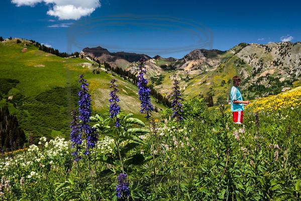 Albian Basin wild flowers