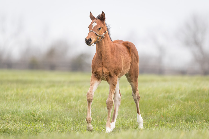 Runhappy - Always in My Heart '18 colt at Pin Oak 4/13/18. Born 2/27/18.