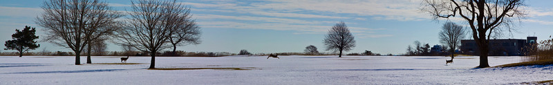 Deer Panarama. This image of a single deer bounding across an open field, was created by stitching 6 separate images together into one.
