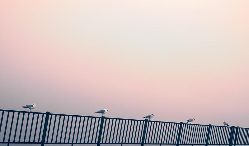 Birds in a row color adjustment-no blue-.jpg