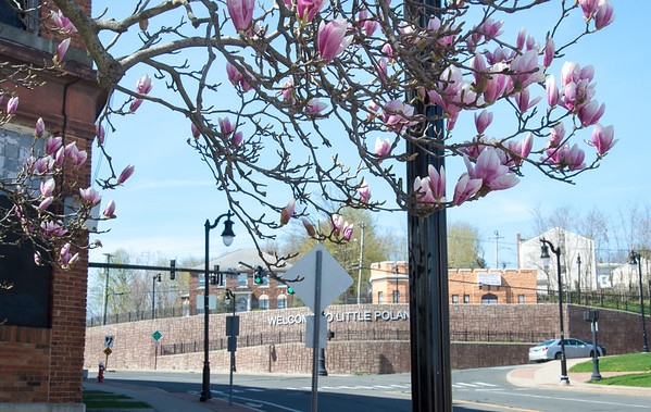 04/17/19 Wesley Bunnell | Staff The Welcome to Little Poland sign can be seen behind a branch of a cherry blossom tree on Wednesday afternoon.