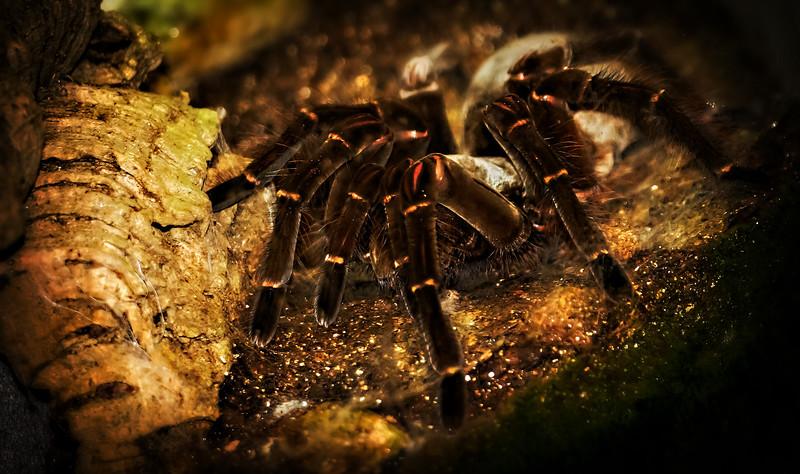 Spiders-Arachnids-042.jpg