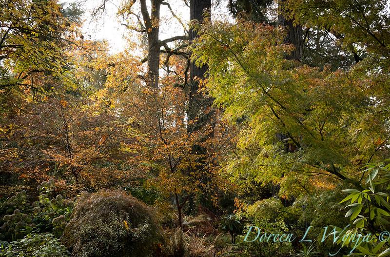 Dietrick fall garden_2113.jpg
