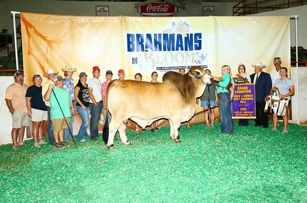 National Junior Brahman Show
