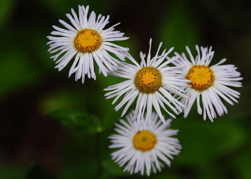 NEA_3070-7x5-Flower.jpg