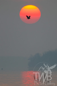 Eagle and the rising sun, the Mississippi River