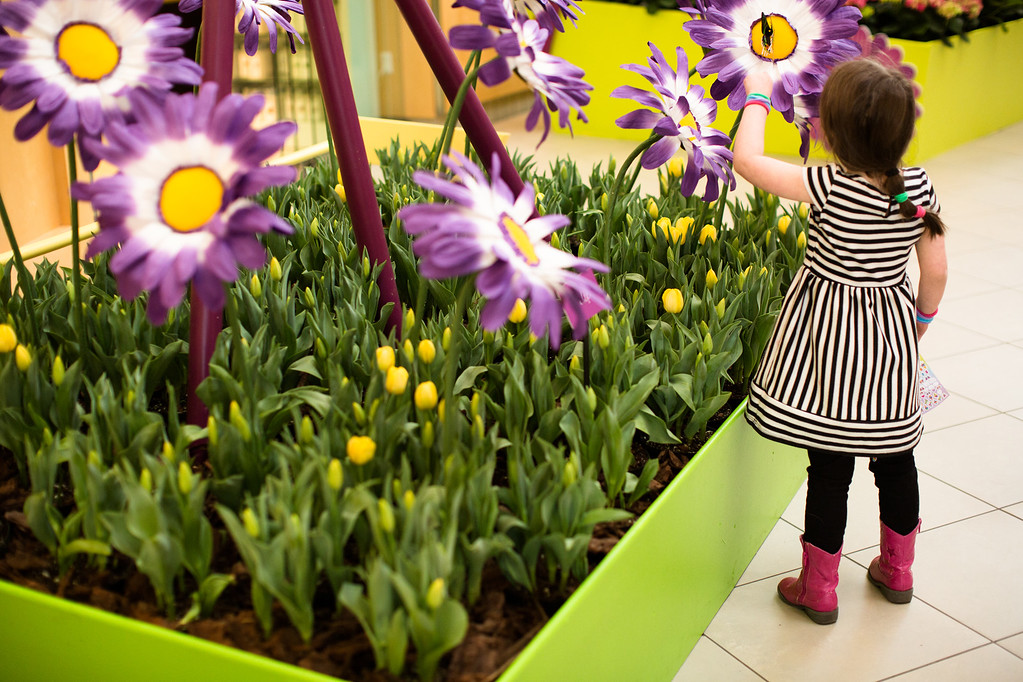 ". Cleveland Botanical Garden�s annual celebration of spring opens March 18 and runs through April 23. For more information, visit <a href=""http://www.cbgarden.org/\"">cbgarden.org</a>. (Submitted)"