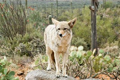 2006 - Tucson AZ