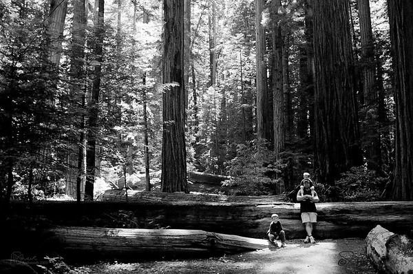 Redwoods 2005