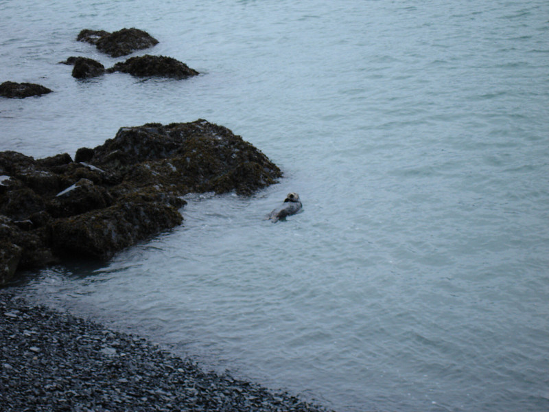 Alaska 2008 027.jpg