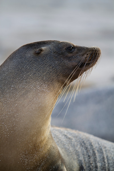 Sea Lion on San Cristobal.jpg