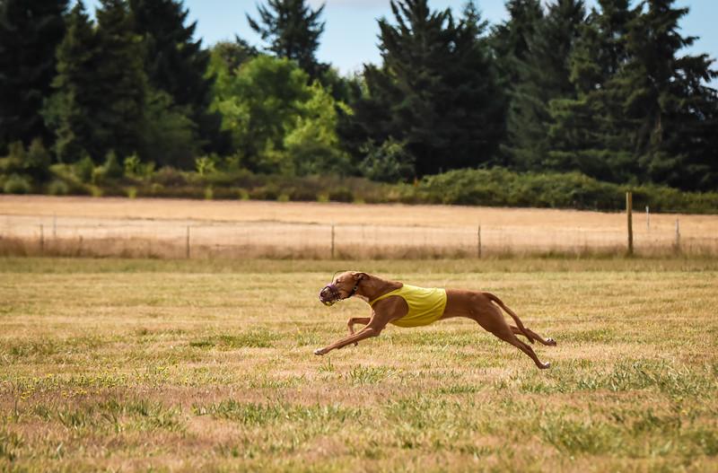 pharoahhound-3.jpg