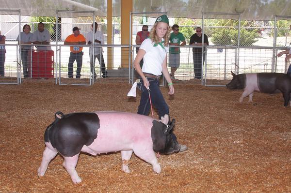 SBC Fair Livestock 2012