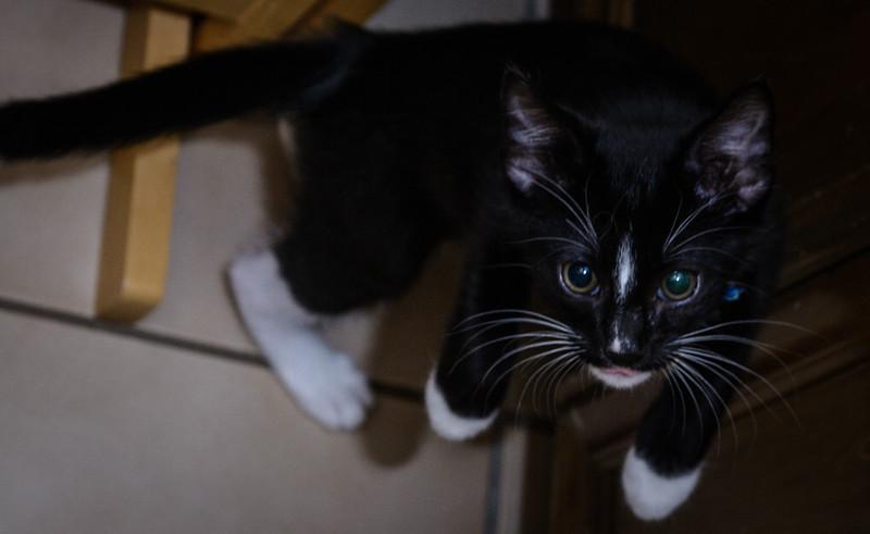 Kitten-0622.jpg