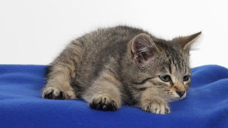kitten_546_03.mov