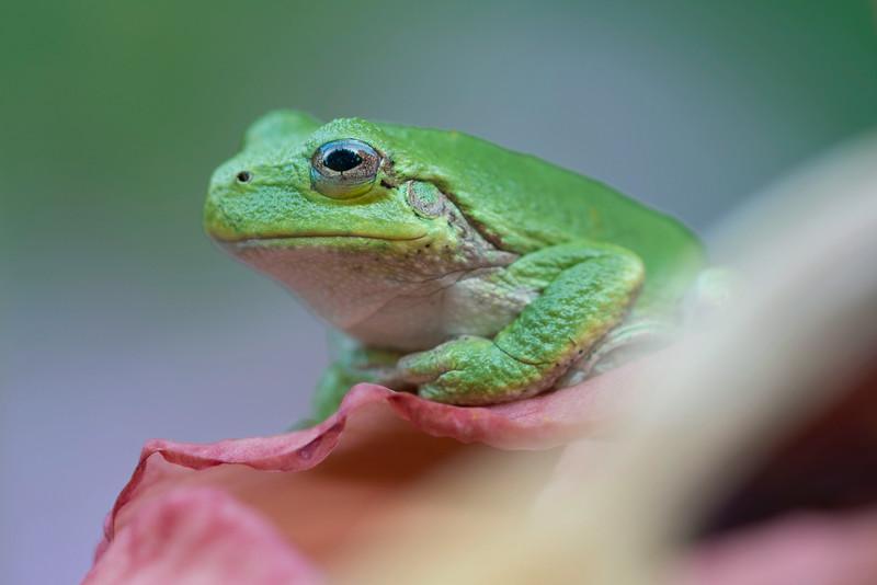 Frog_7767LowRes.jpg