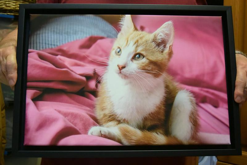 2015-07-11 Bezoek kittens 082.JPG