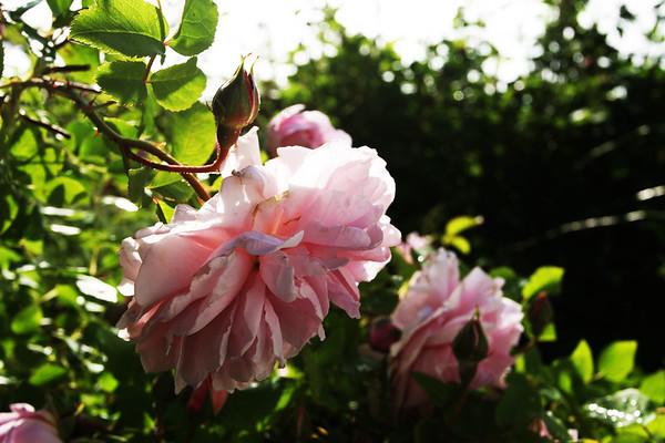 Flowers_060510_0063.JPG