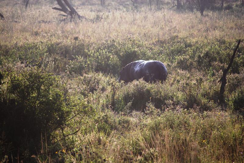 Serengeti (92).JPG