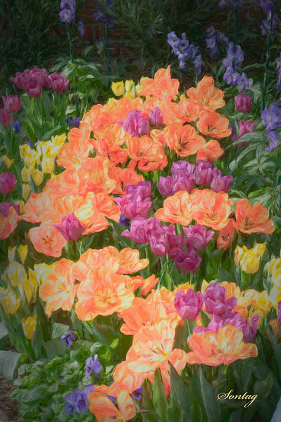 Flowers Artwork - Tulip