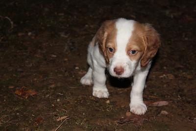 2012-01-24 Puppies!