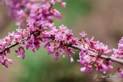 20180421 - Spring Flowers