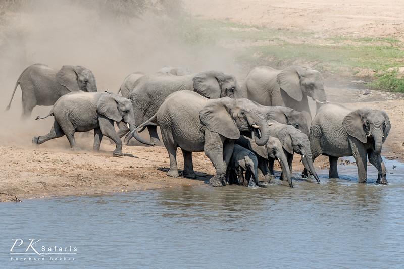 BW Bekker PKSafaris Elephants (1 of 4).jpg