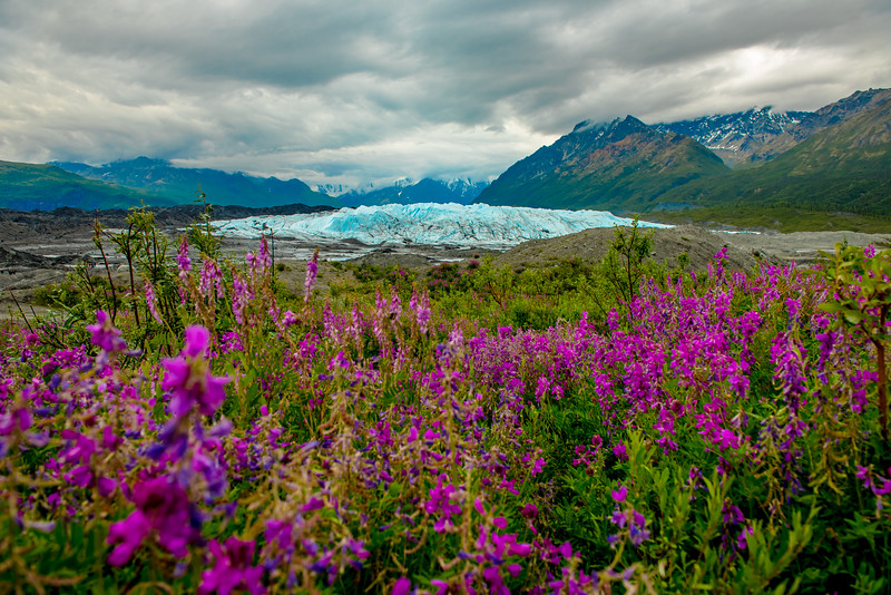 Matanuska Glacier with Fireweed.jpg