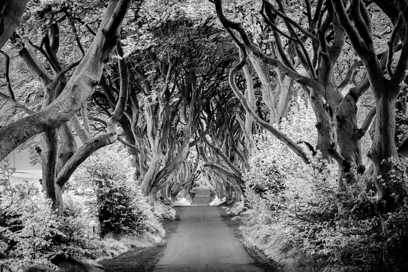 Dark Hedges Infrared.jpg